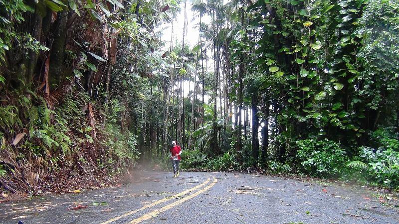 熱帯雨林気候