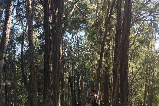 Makiki Valley Loop Trail 「マキキ・バレー・ループ・トレイル」