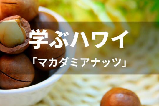 【学ぶハワイ】マカダミアナッツ