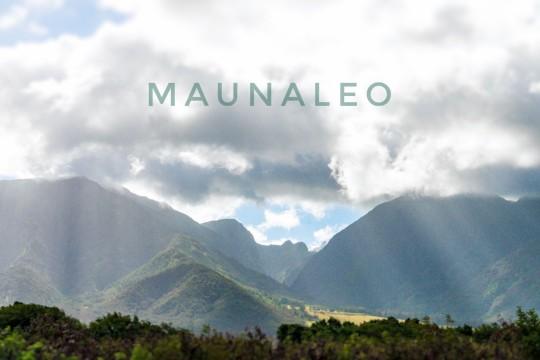 メレの中のハワイ百景〜マウイ島マウナレオ