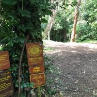 Judd Trail 「ジャッドトレイル」