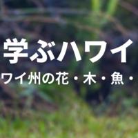 【学ぶハワイ】ハワイ州の花・木・鳥・魚とは?