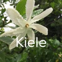 メレの中のハワイ語〜キエレ