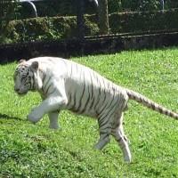 ヒロの動物園