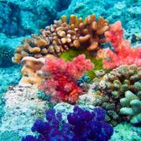 【ハワイ渡航前にチェック】サンゴ礁にやさしい日焼け止めを使おう