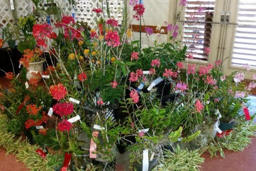 Spring Fantasy Orchid Show