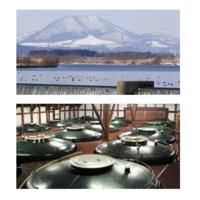 ハイズ、230年の歴史を誇る老舗酒蔵の日本酒「真鶴」をハワイ初入荷